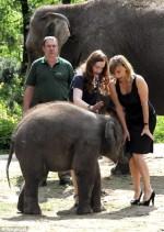 elefanti-funny