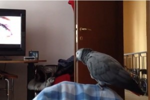 papagalul paulie