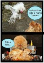 pisica-vs-cocos