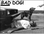 Câine rău! :))))