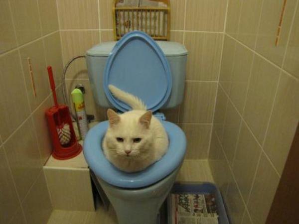 ce crezi ca face aici pisica