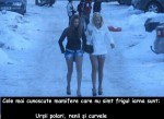 mamifere iarna