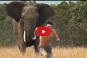 turma de elefanti